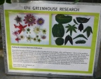 Passiflora research