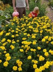 The children's garden -- The children's garden