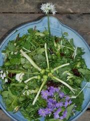 Allium zebdanense flowers in spring salads -- Allium zebdanense flowers in spring salads