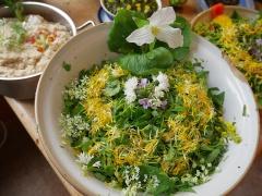Allium zebdanense in spring salad -- Allium zebdanense in spring salad