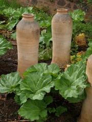 Rhubarb forcing pots -- Rhubarb forcing pots