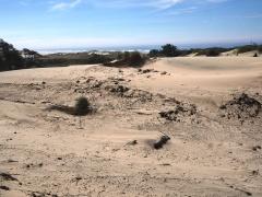 Oregonian dunes -- Oregonian dunes