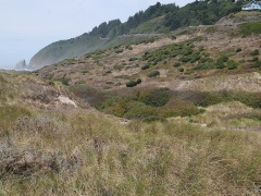 We're now on a coastal dune walk! -- We're now on a coastal dune walk!