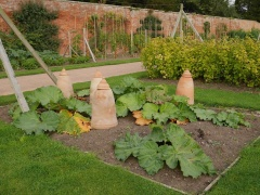 Rhubarb forcing pots! -- Rhubarb forcing pots!