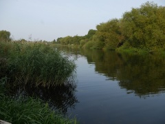 The River Avon at Pershore