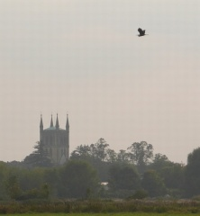 Heron and Pershore Abbey -- Heron and Pershore Abbey