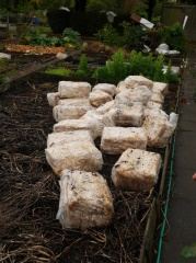 Betty had been given lots of spent oyster mushroom cubes -- Betty had been given lots of spent oyster mushroom cubes