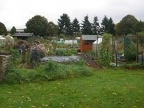 Walsall Road Allotments