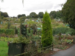 At the Uplands entrance -- At the Uplands entrance, allotments as far as the eye can see