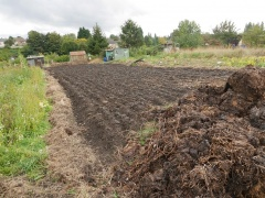 Many of the plots were large -- Many of the plots were large: small market gardens often growing just the one crop. Brian had a friend who came and did the plowing for allotment holders