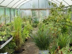 The polytunnel was also full of interesting plants!