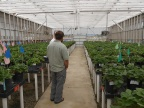 Hundreds of strawberry cultivars!