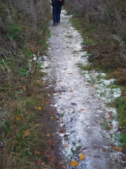 Icy path -- It wasn't cold, but suddenly in a opening we were surprised by ice on the path!