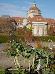 Marrowstem kales -- Marrowstem kales
