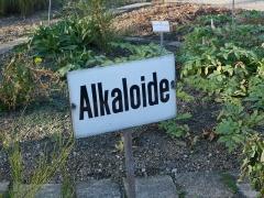 The alkaloid garden -- The alkaloid garden