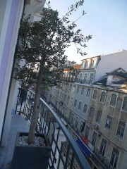 View from my hotel in Lisbon -- View from my hotel in Lisbon: Olive tree