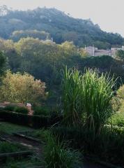 Jardim dos Aromas: Sugar cane  -- Jardim dos Aromas: Sugar cane