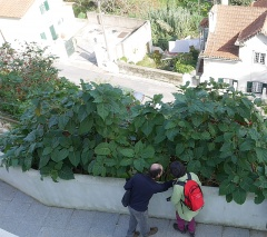 Fernanda Botelho and Jorge Carona examine a Tree Tomato -- Fernanda Botelho and Jorge Carona examine a Tree Tomato,Cyphomandra betacea
