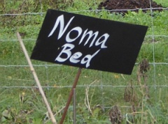 The NOMA bed -- The NOMA bed