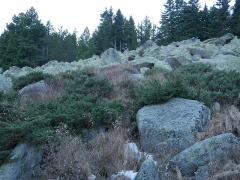 Moraine field with Juniperus sibirica -- Moraine field with Juniperus sibirica