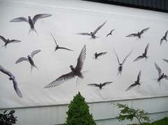 Páll's own Arctic Tern picture mural  -- Páll's own Arctic Tern picture mural