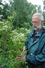 Caressing my Aster scaber :) -- Caressing my Aster scaber :)