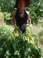 Peace seedling Dylana Kapuler with edamame haul -- Peace seedling Dylana Kapuler with edamame haul