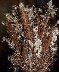 Fertile Ostrich Fern arrangement by Wanda... -- Fertile Ostrich Fern arrangement by Wanda...
