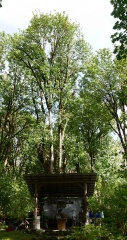 The kitchen in the food forest -- The kitchen....the food forest is everywhere around with tall trees ..