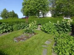 Sorrel garden -- Now in the sorrel or buckwheat family (slireknefamilien) section of the garden (Polygonaceae)