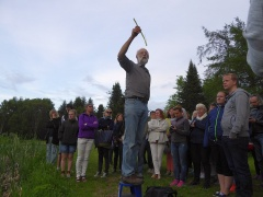 Showing the spring shoot of Typha latifolia -- Showing the spring shoot of Typha latifolia