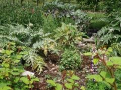 Diversity in the forest garden -- Diversity in the forest garden