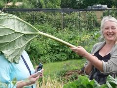 Giant rhubarb! -- Giant rhubarb!