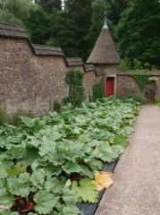 More rhubarb -- More rhubarb
