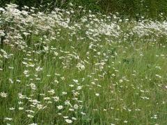 Food in the meadow too! -- Food in the meadow too!