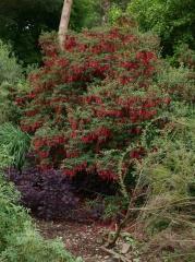 Floriferous Fuchsia -- Floriferous Fuchsia